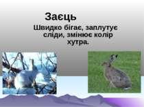 Заєць Швидко бігає, заплутує сліди, змінює колір хутра.
