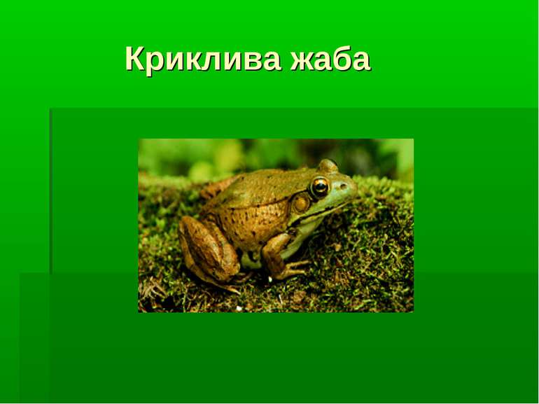 Криклива жаба