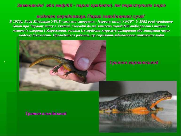 Земноводні або амфібії - перші хребетні, які переступили поріг водного середо...