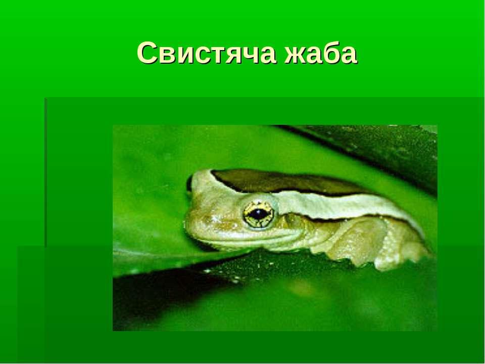 Свистяча жаба