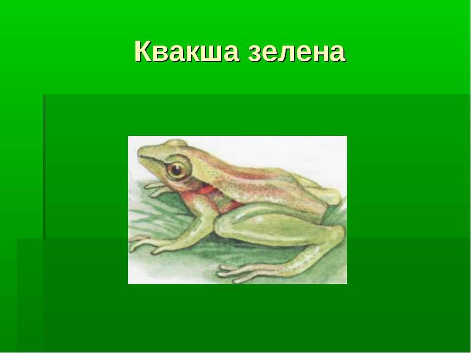 Квакша зелена