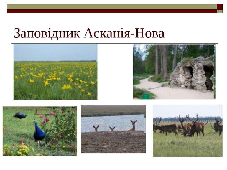Заповідник Асканія-Нова