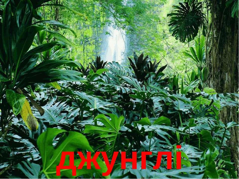 джунглі