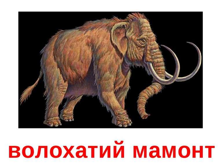 волохатий мамонт