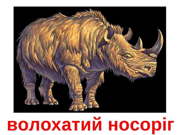 волохатий носоріг