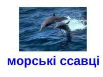 морські ссавці