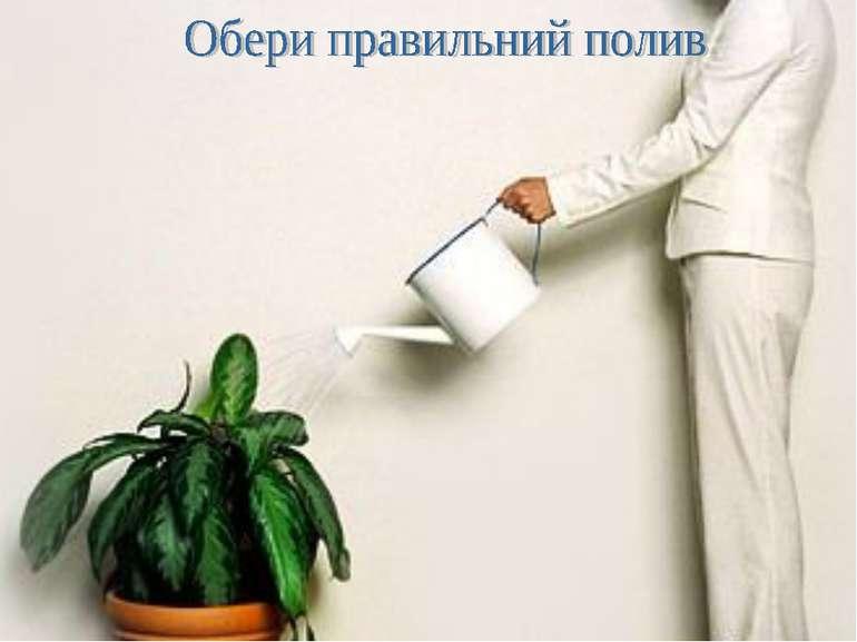 Поливання рослин