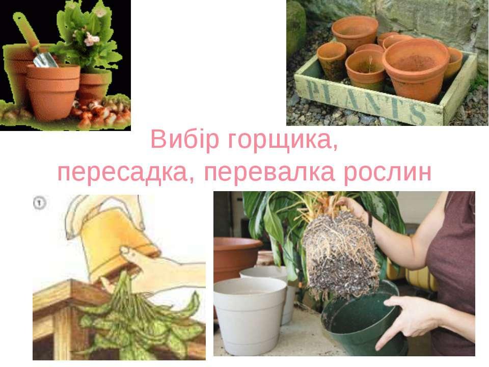 Вибір горщика, пересадка, перевалка рослин