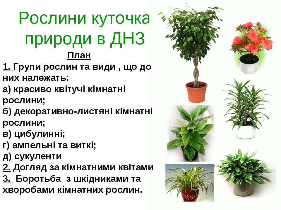 Рослини куточка природи в ДНЗ План 1. Групи рослин та види , що до них належа...