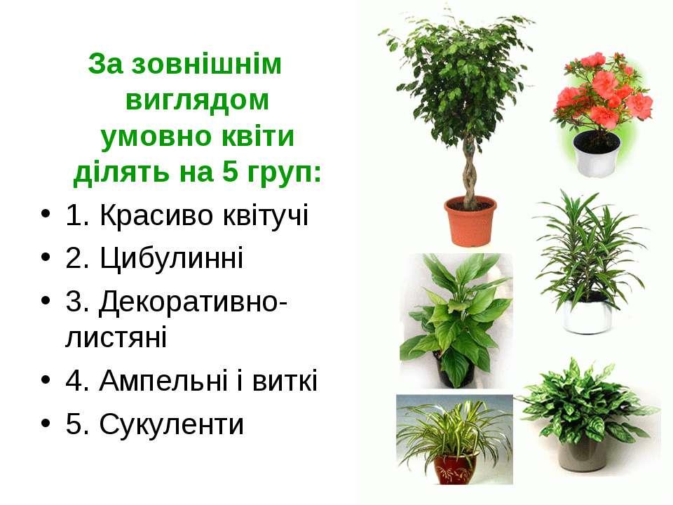 За зовнішнім виглядом умовно квіти ділять на 5 груп: 1. Красиво квітучі 2. Ци...