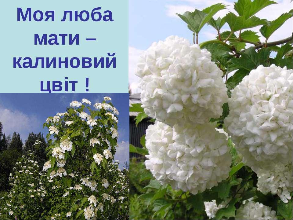 Моя люба мати – калиновий цвіт !