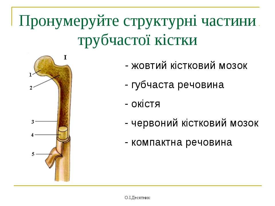 Пронумеруйте структурні частини трубчастої кістки - жовтий кістковий мозок - ...