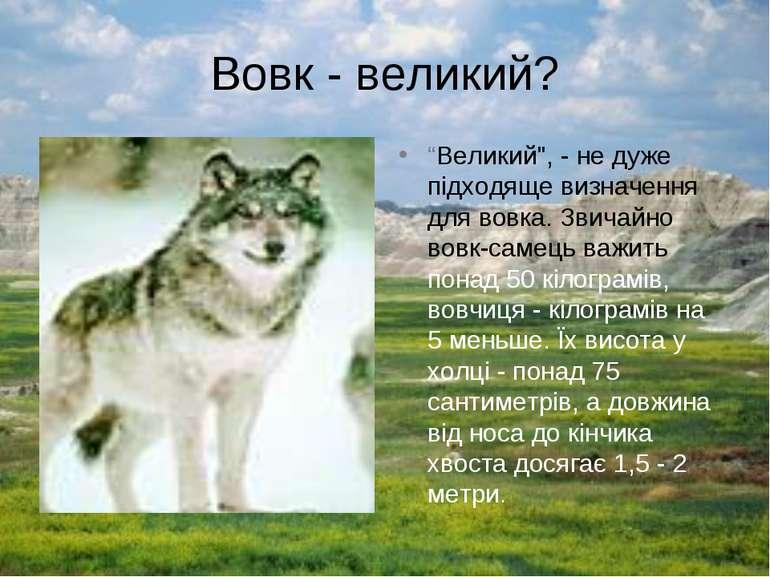 "Вовк - великий? ""Великий"", - не дуже підходяще визначення для вовка. Звичайно..."