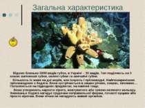 Загальна характеристика Відомо близько 5000 видів губок, в Україні – 30 видів...