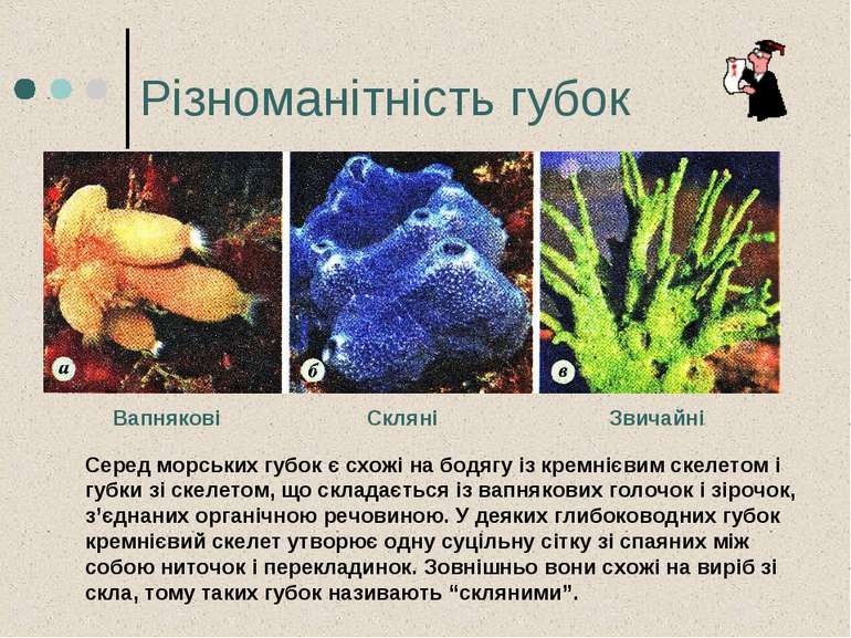 Різноманітність губок Серед морських губок є схожі на бодягу із кремнієвим ск...