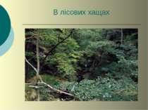 В лісових хащах