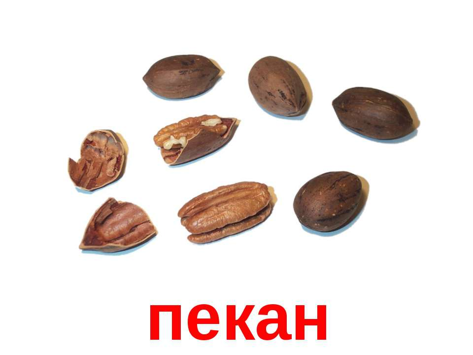 пекан