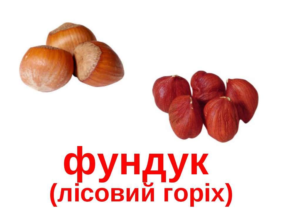 фундук (лісовий горіх)