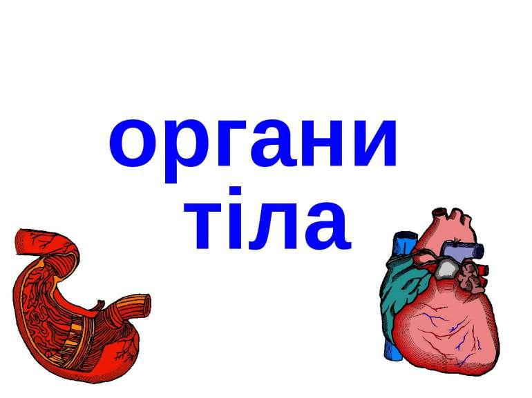 органи тіла