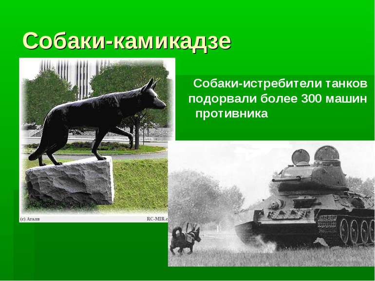 Собаки-камикадзе Собаки-истребители танков подорвали более 300 машин противника