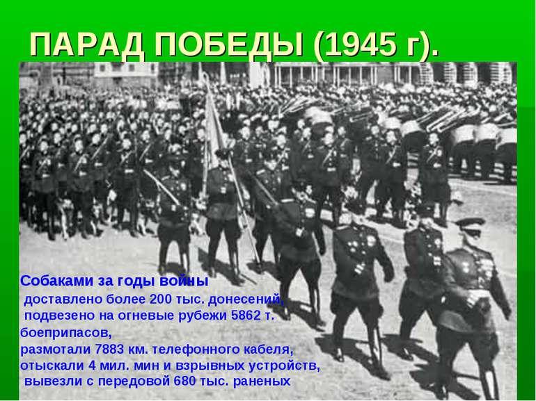 ПАРАД ПОБЕДЫ (1945 г). Собаками за годы войны доставлено более 200 тыс. донес...