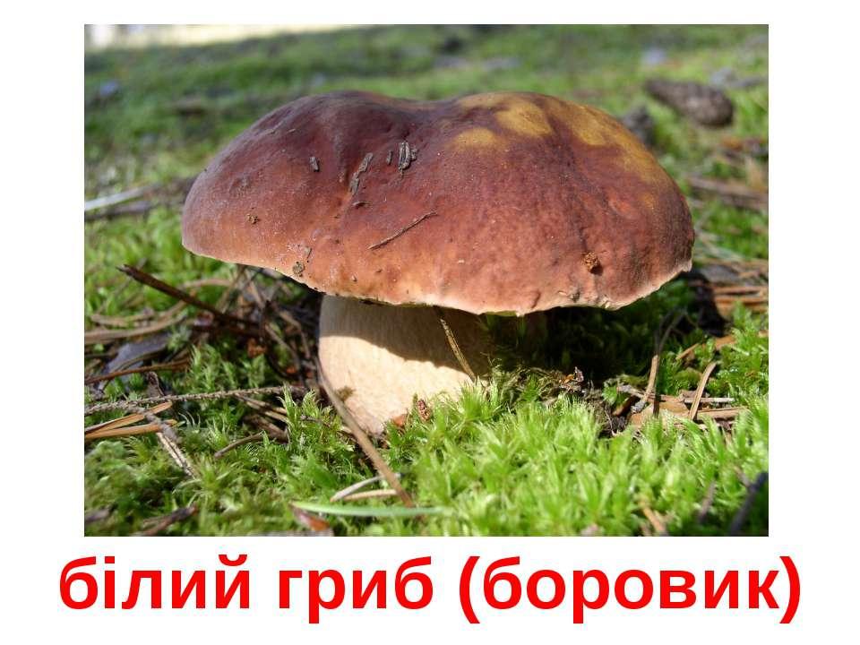 білий гриб (боровик)