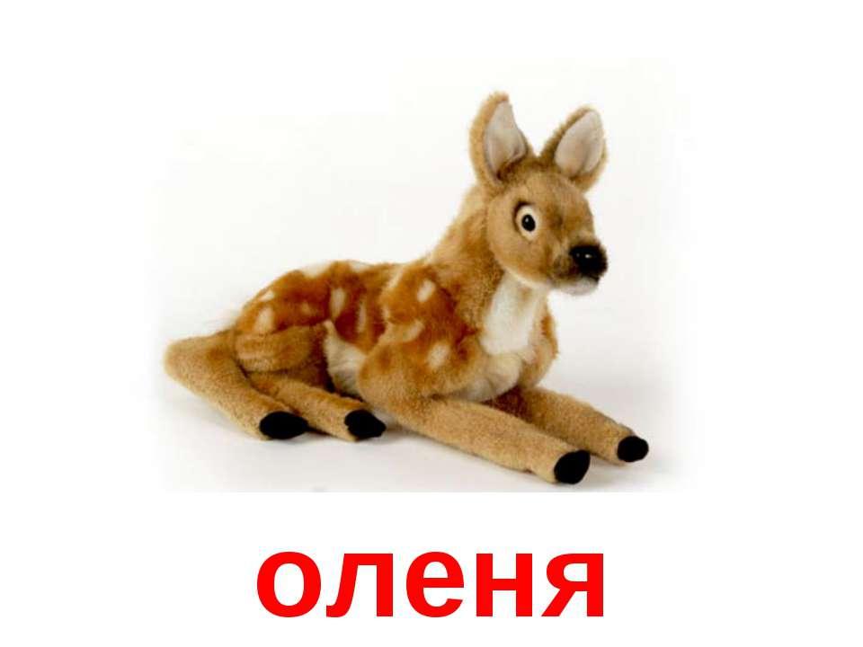 оленя