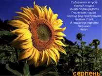 серпень Собираем в августе Урожай плодов. Много людям радости После всех труд...