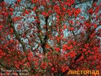 листопад Погляди в свое окно: Все на улице красно!
