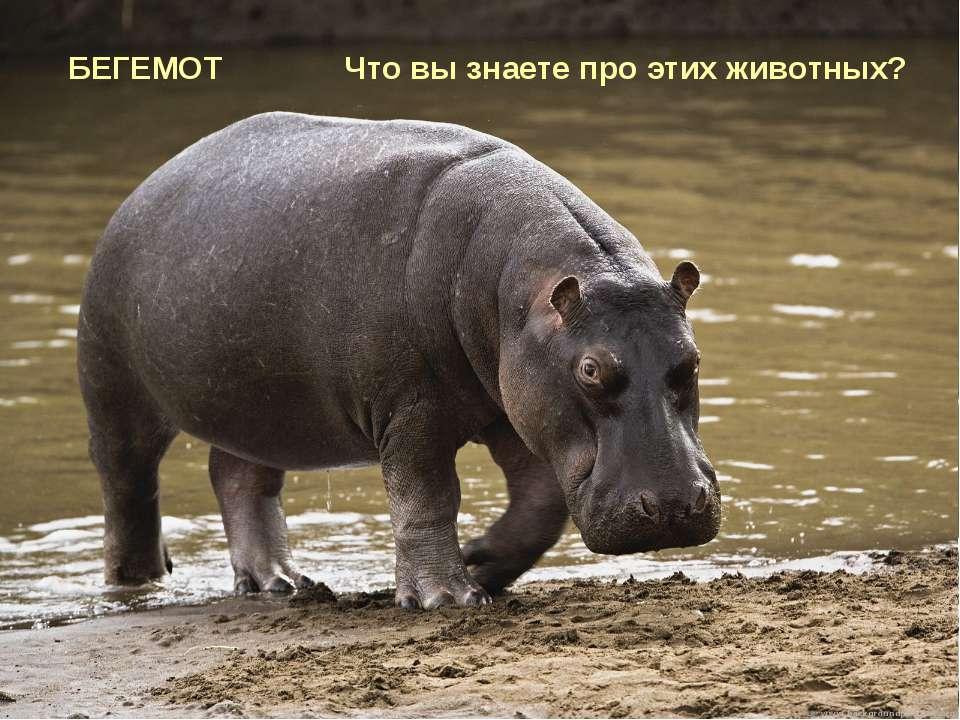 Я люблю в воде купаться, И питаюсь я травой. Но понять мне очень трудно, Поче...