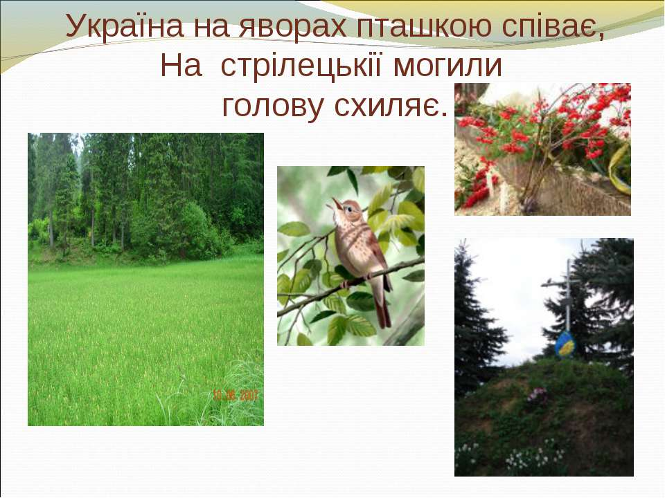 Україна на яворах пташкою співає, На стрілецькії могили голову схиляє.