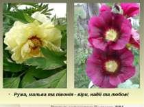 Ружа, мальва та півонія - віри, надії та любові Вчитель математики Подгорна Т.М.