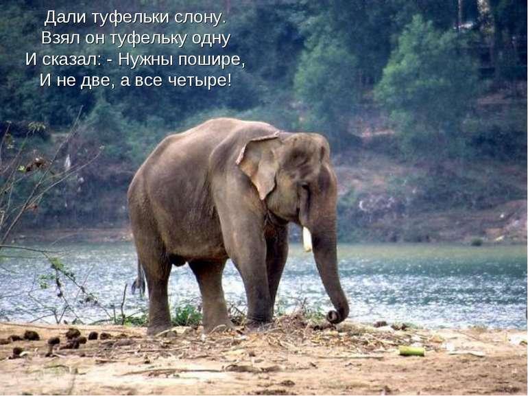 Дали туфельки слону. Взял он туфельку одну И сказал: - Нужны пошире, И не две...