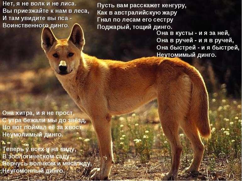 Нет, я не волк и не лиса. Вы приезжайте к нам в леса, И там увидите вы пса - ...