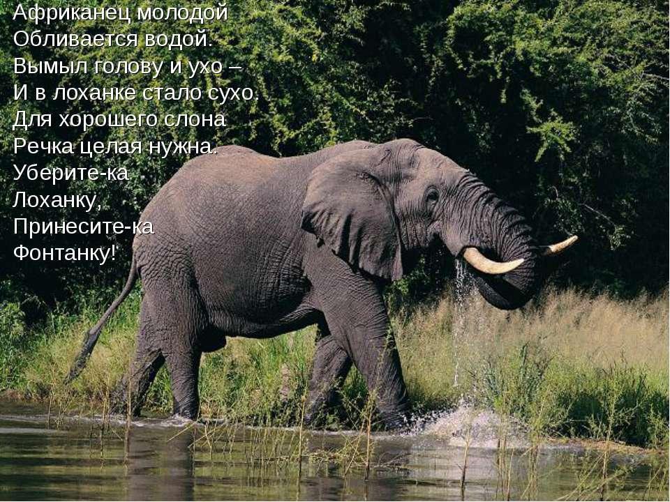 Африканец молодой Обливается водой. Вымыл голову и ухо – И в лоханке стало су...