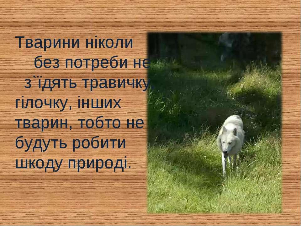 Тварини ніколи без потреби не з`їдять травичку, гілочку, інших тварин, тобто ...