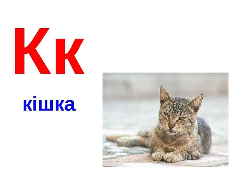 Кк кішка