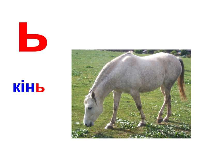 ь кінь