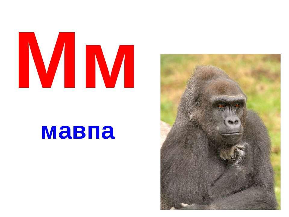 Мм мавпа