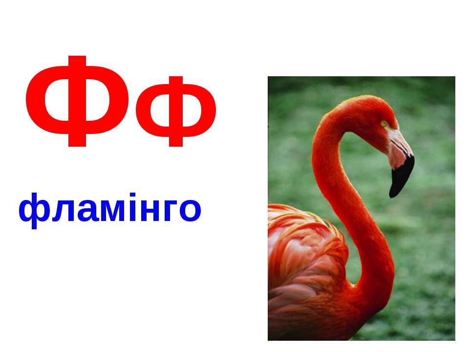 ФФ фламінго