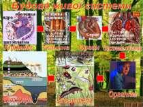 Частина кровоносної системи людини Video 12 Серце М'язова тканина Система клі...