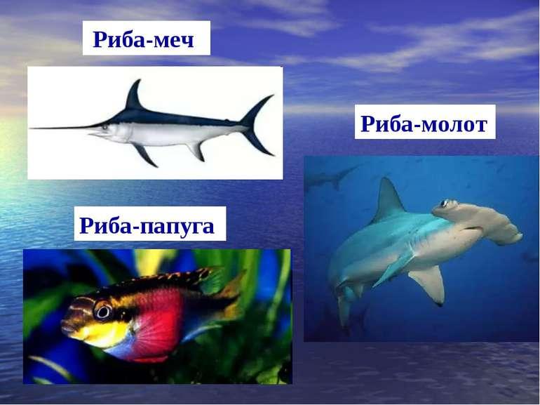 Риба-меч Риба-молот Риба-папуга