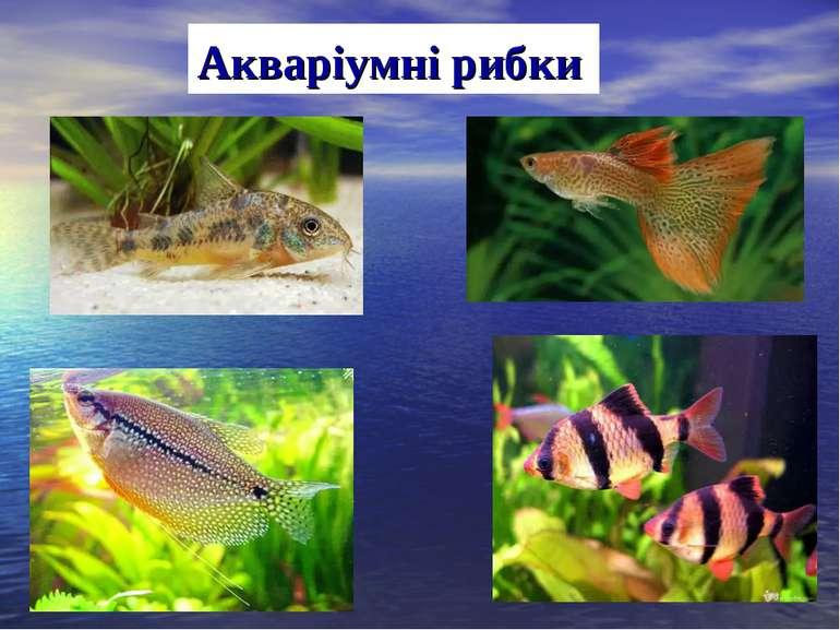 Акваріумні рибки