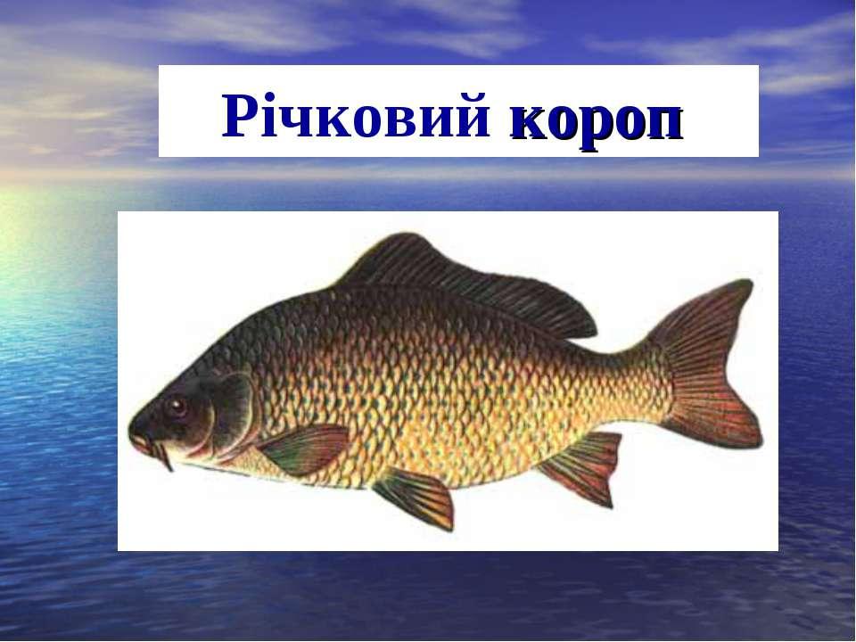 Річковий короп