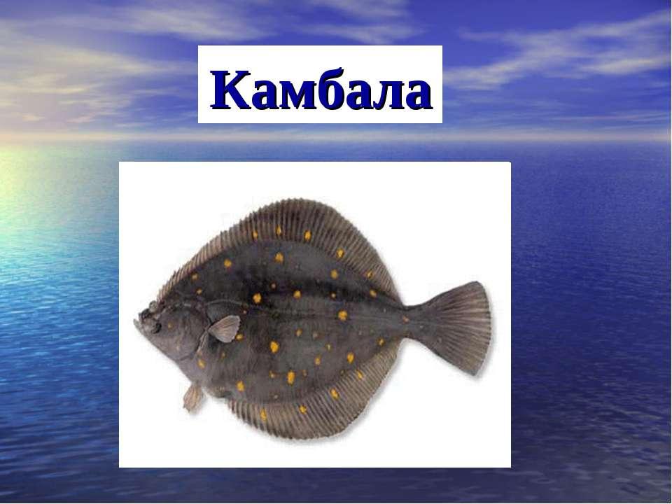 Камбала