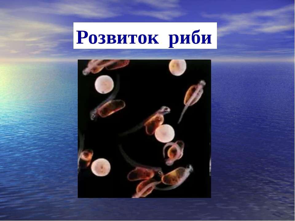 Розвиток риби