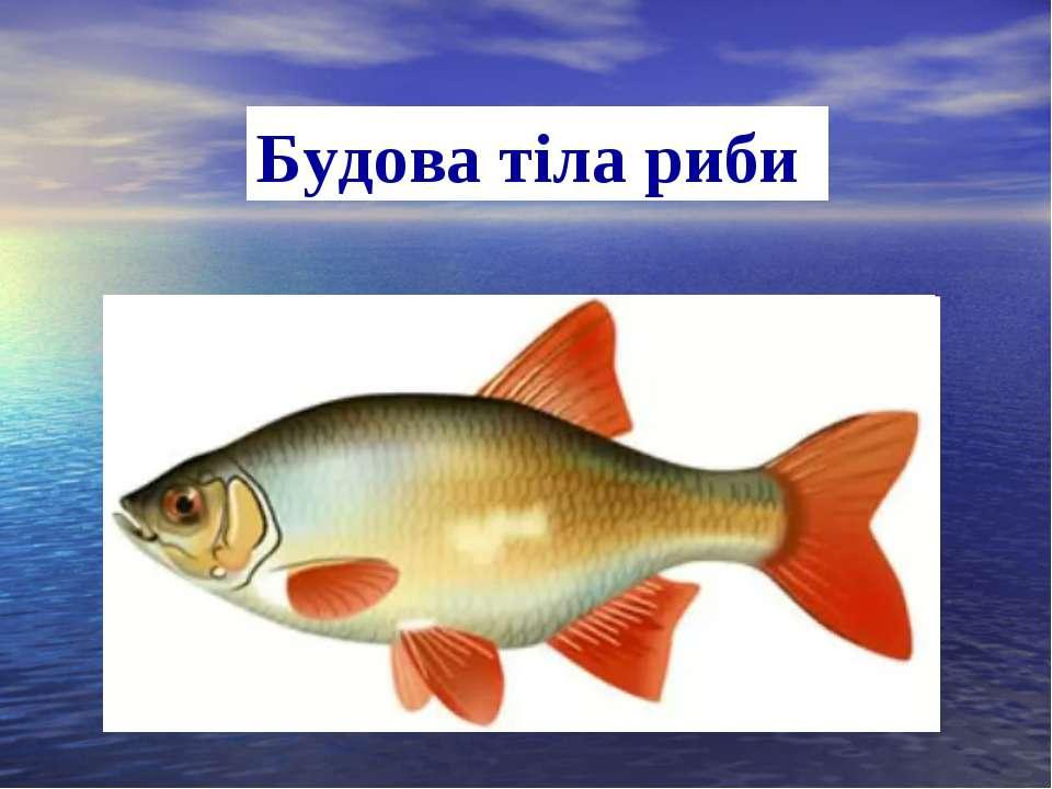 Будова тіла риби