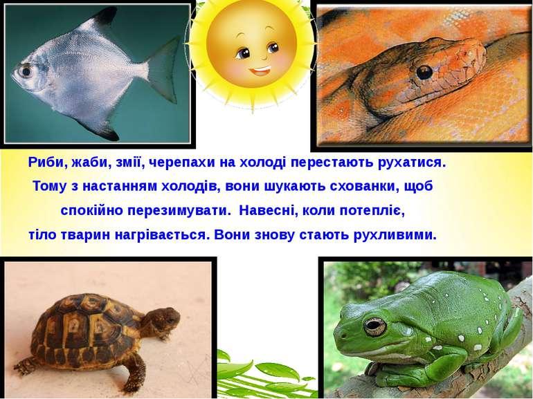 Риби, жаби, змії, черепахи на холоді перестають рухатися. Тому з настанням хо...
