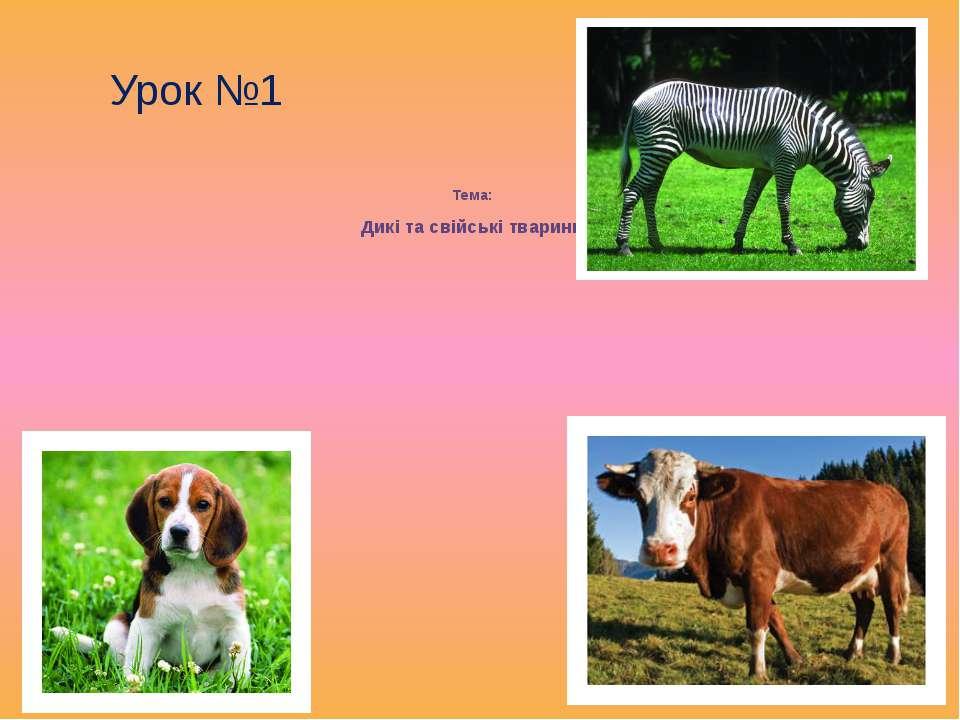 Тема: Дикі та свійські тварини Урок №1