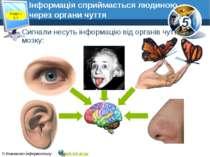 Інформація сприймається людиною через органи чуття Сигнали несуть інформацію ...